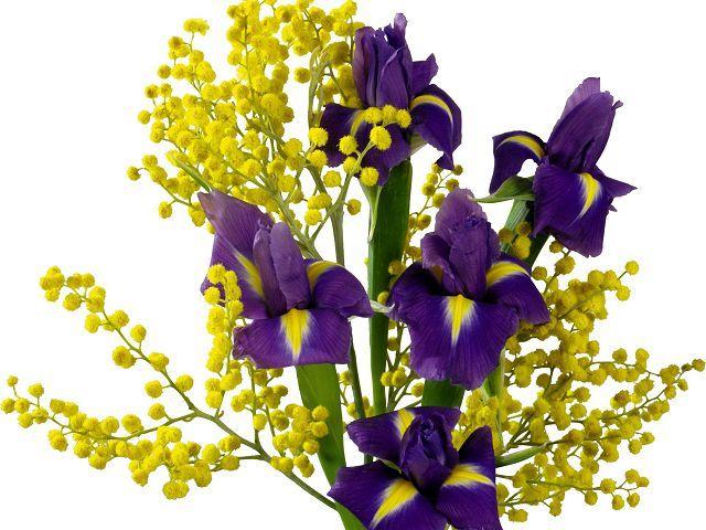 Blumen Symbolik und Bedeutung. Sprach- und Farbwerte Hier sind ...
